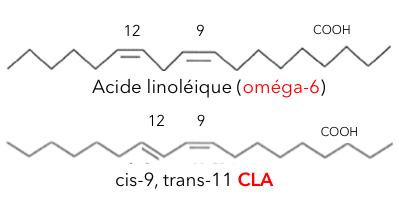 Acide-linoléique
