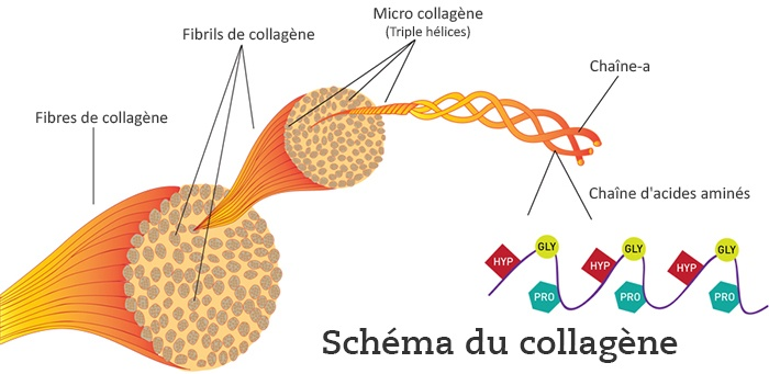 modere-trim-collagene