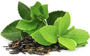 Extrait-thé-vert-beauty-nectar-modere